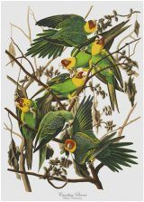 Parrot Tea Towel