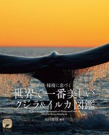 The Most Beautiful Photographs of Whales and Dolphins [Japanese]