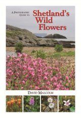 A Photographic Guide to Shetland's Wild Flowers