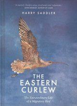 The Eastern Curlew