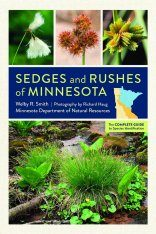 Sedges and Rushes of Minnesota