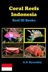 Coral Reefs Indonesia