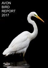 Avon Bird Report 2017