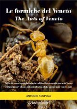 The Ants of Veneto: Natural History of Ants and Identification of the Species from Veneto, Italy / Le Formiche del Veneto: Guida alla Conoscenza delle Formiche e all'Identificazione delle Specie del Veneto