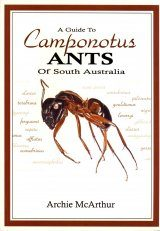 A Guide to Camponotus Ants of South Australia