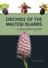 Orchids of the Maltese Islands