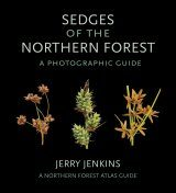 Sedges of the Northern Forest: A Photographic Guide