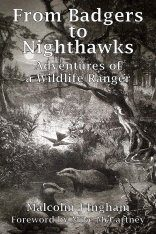 From Badgers to Nighthawks