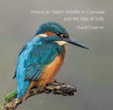 Where to Watch Wildlife in Cornwall and the Isles of Scilly