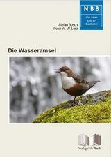 Die Wasseramsel [The White-Throated Dipper]