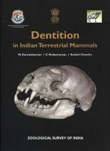 Dentition in Indian Terrestrial Mammals