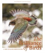 The Brilliance of Birds