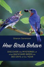 How Birds Behave