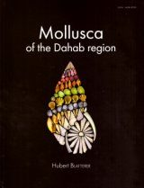 Mollusca of the Dahab Region