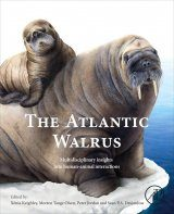 The Atlantic Walrus