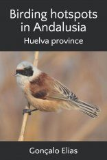 Birding Hotspots in Andalusia