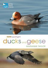 RSPB Spotlight: Ducks and Geese