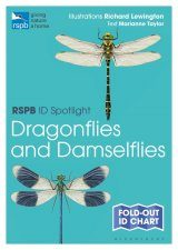 RSPB ID Spotlight: Dragonflies and Damselflies