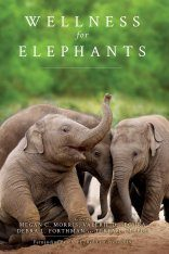 Wellness for Elephants