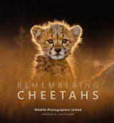 Remembering Cheetahs