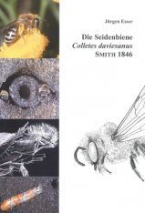 Die Seidenbiene (Colletes daviesanus): Lebensstrategie einer Spezialisierten Wildbiene [The Plasterer Bee (Colletes daviesanus): Life Strategy of a Specialized Wild Bee]