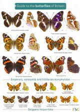 Guide to the Butterflies of Britain and Ireland