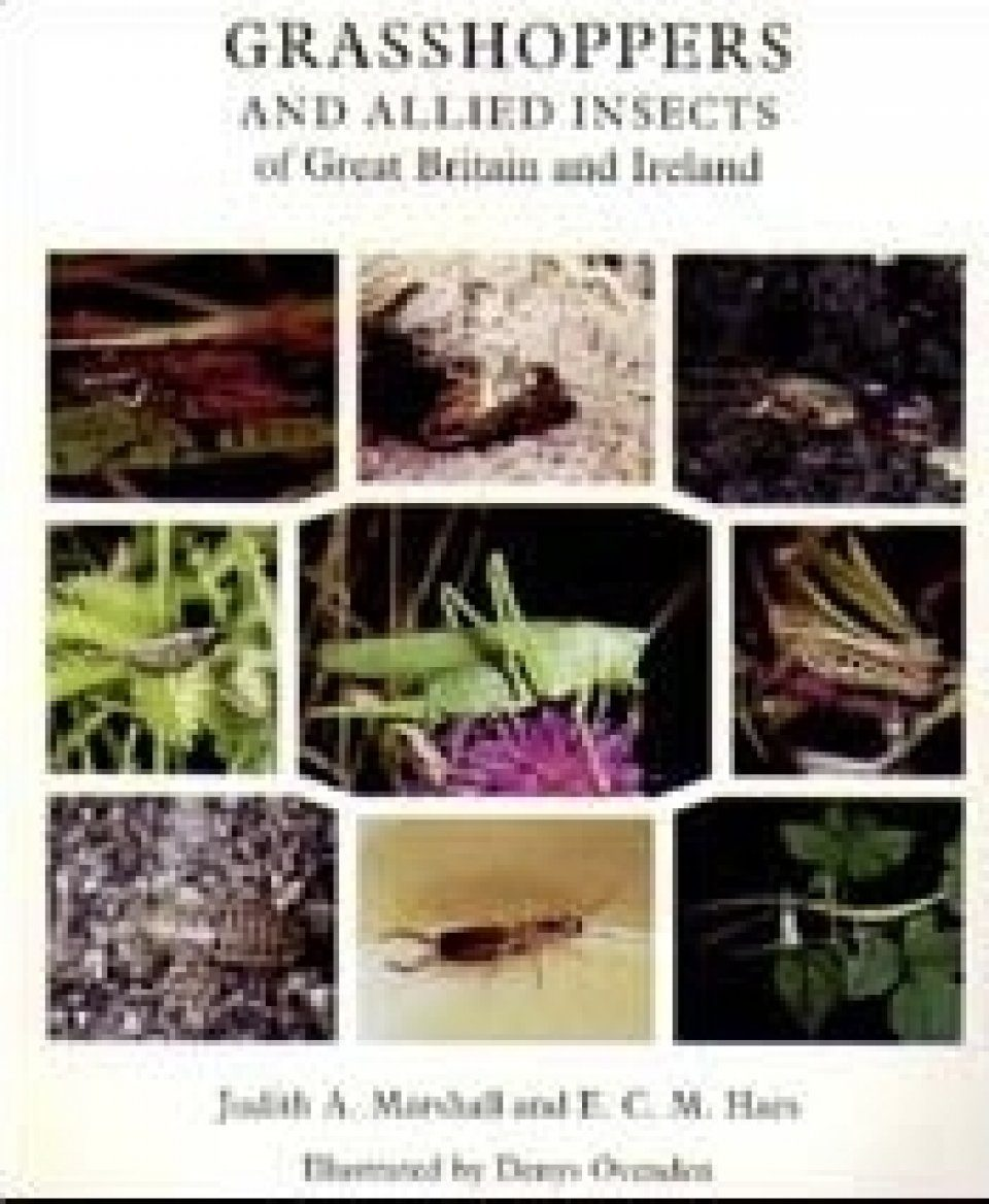 The Grasshoppers and Allied Insects of Great Britain and Ireland