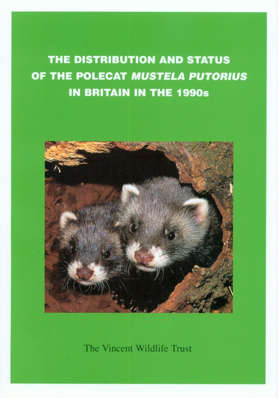 Distribution and Status of the Polecat (Mustela putorius) in Britain in the 1990s