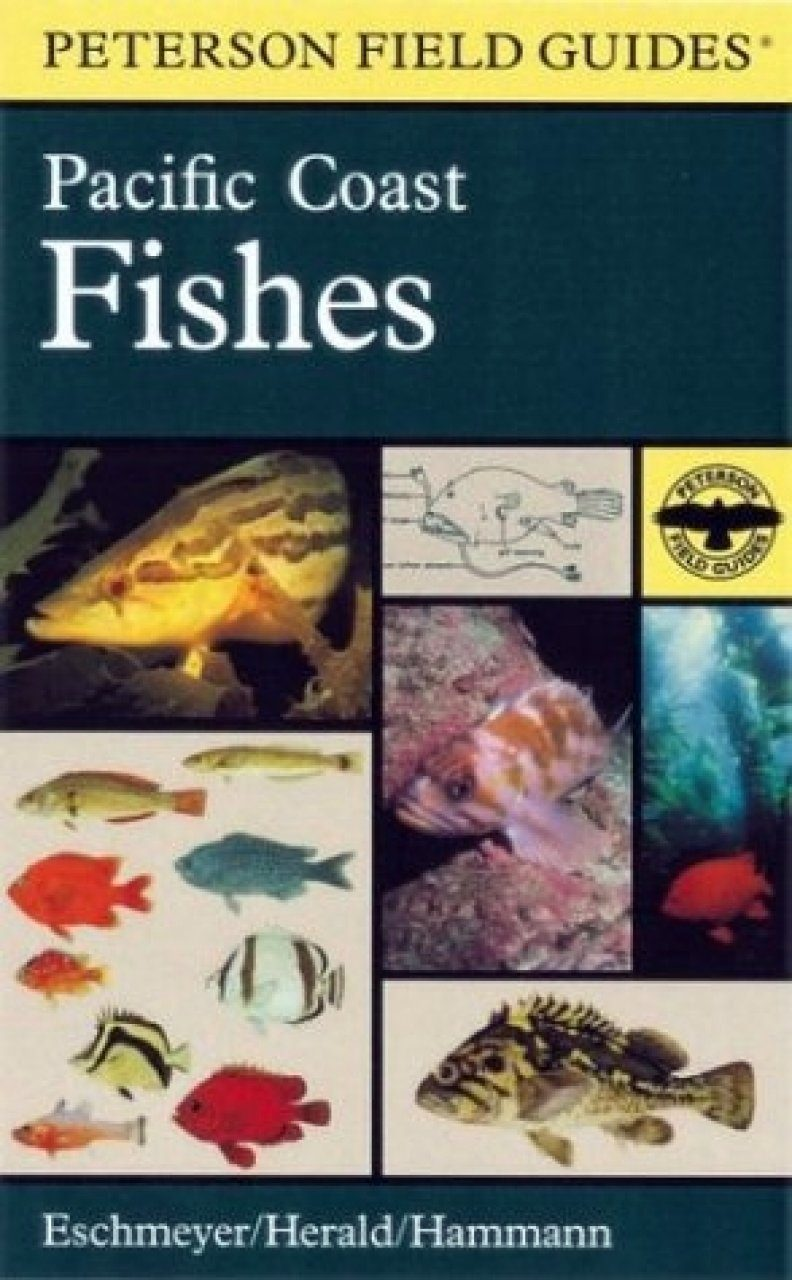 Peterson Field Guide to Pacific Coast Fishes of North America