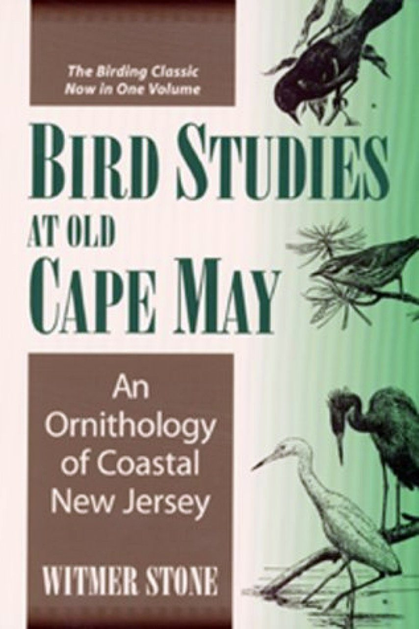 Bird Studies at Old Cape May