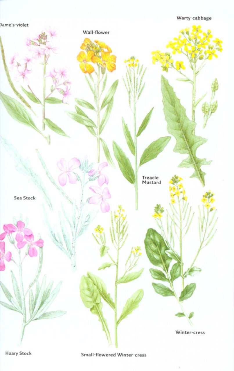 Collins Flowers Guide Nhbs Field Guides Natural History