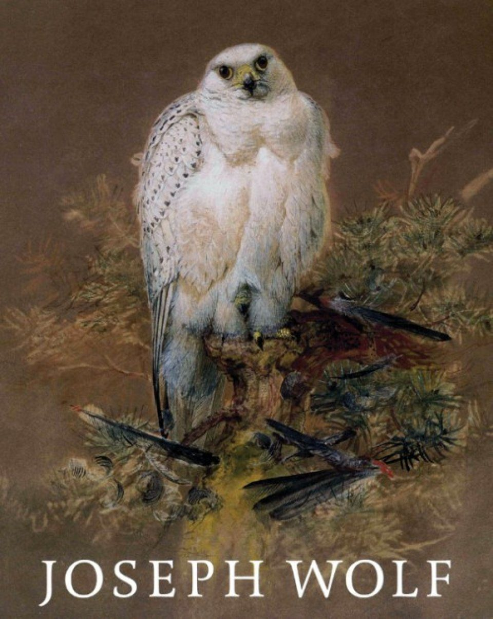 Joseph Wolf (1820-1899): Animal Painter / Tiermaler
