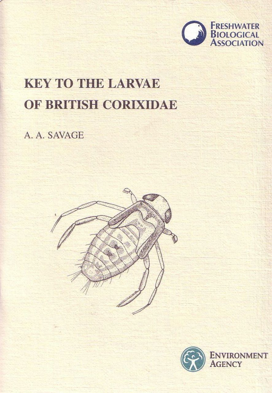 Key to the Larvae of British Corixidae