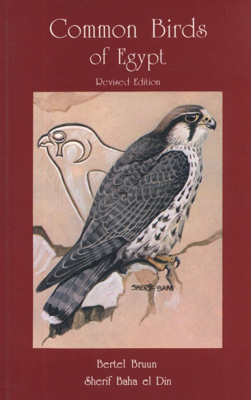 Common Birds of Egypt