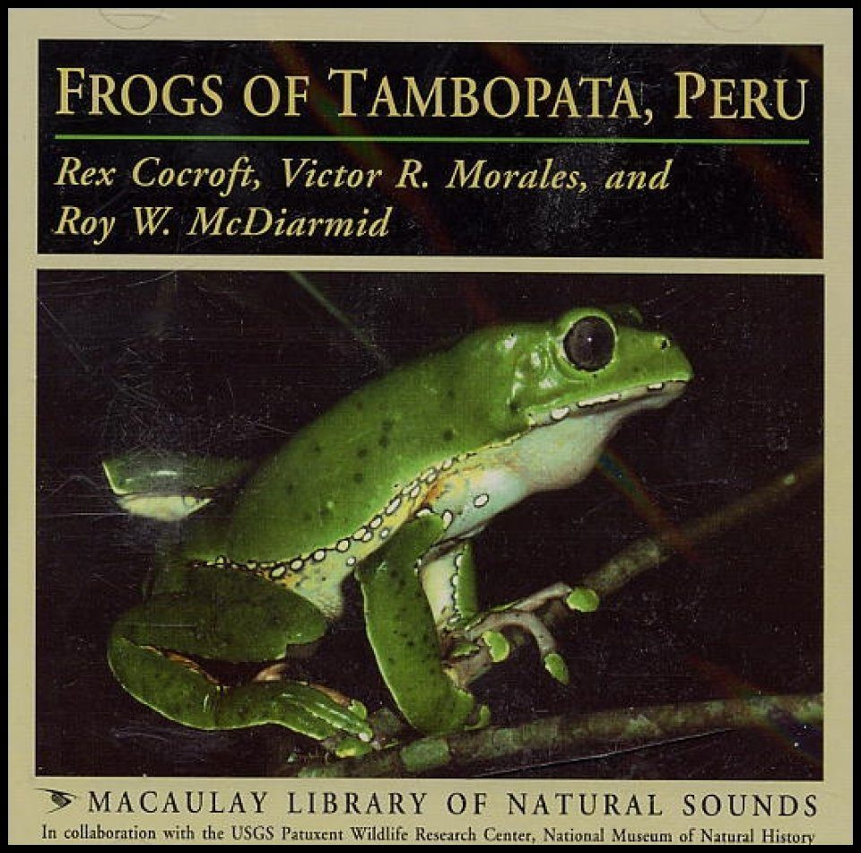 Frogs of Tambopata