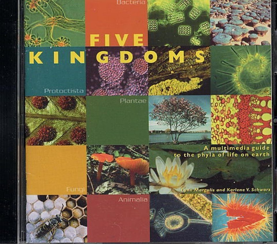Five Kingdoms (CD-ROM)