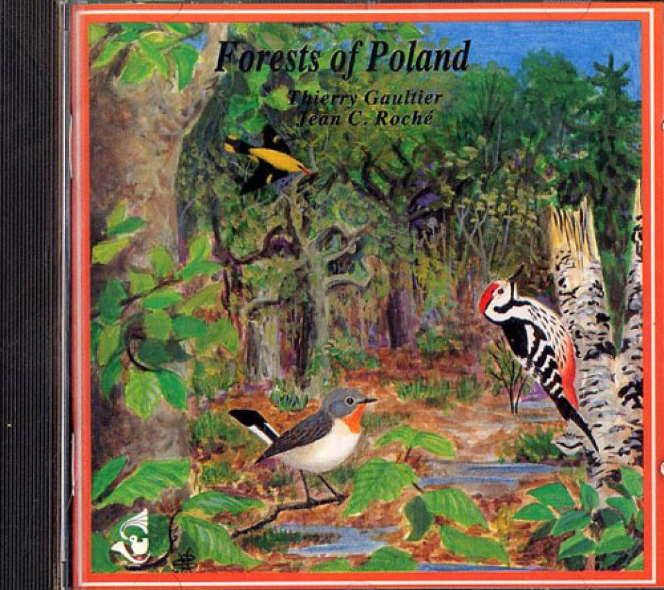 Forests of Poland / Forêts de Pologne - Bialowiéja