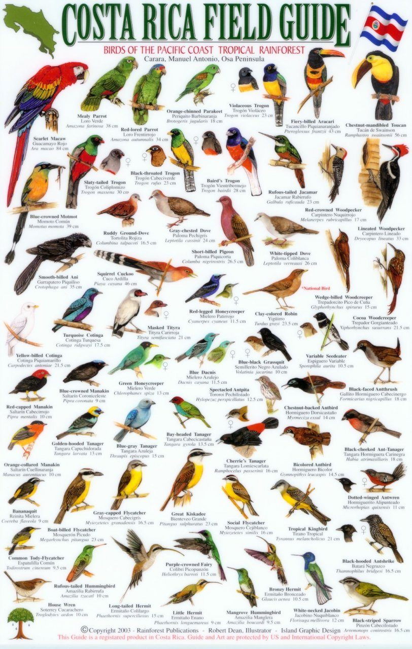 Costa rica field guide birds of the pacific coast tropical costa rica field guide birds of the pacific coast tropical rainforest osa peninsula kristyandbryce Gallery