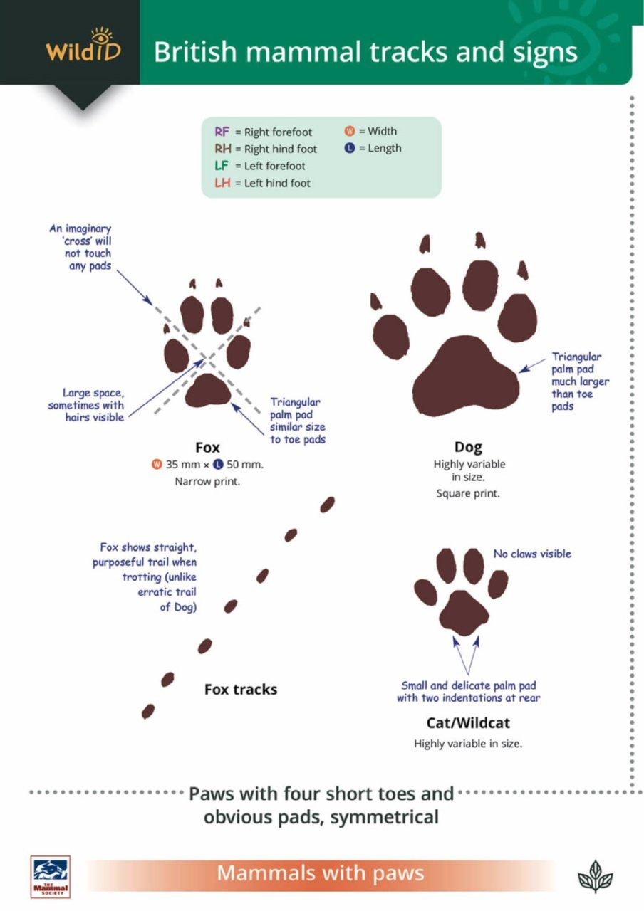 A Guide to British Mammal Tracks and Signs