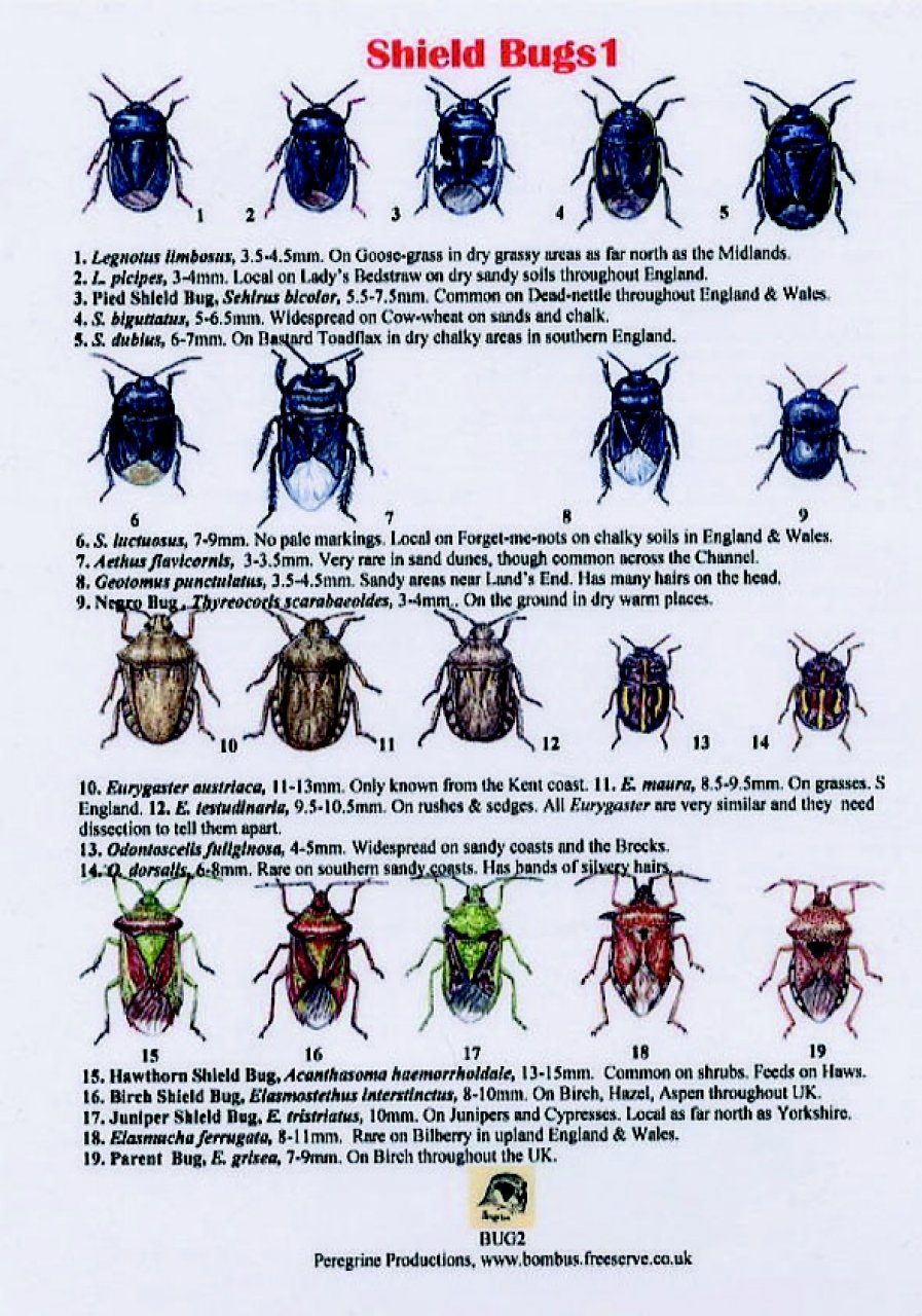 Insect Identification Plates - NHBS