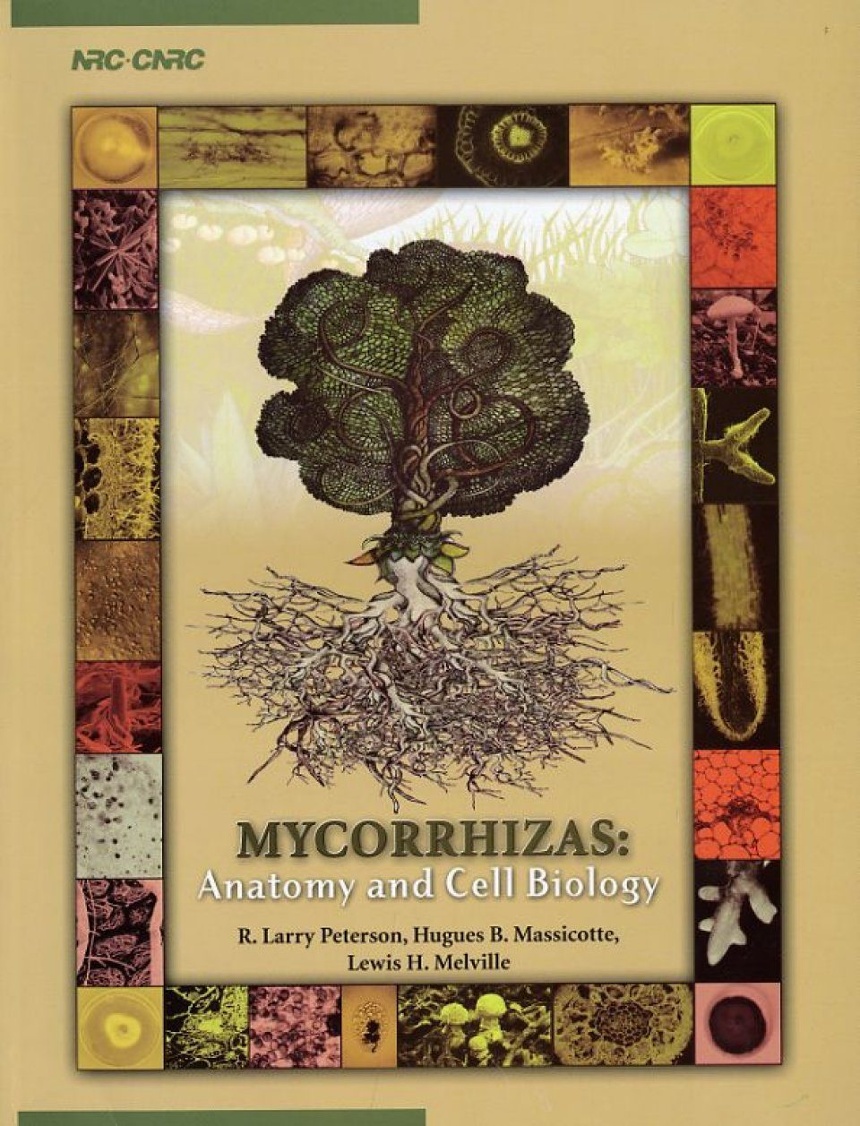 Mycorrhizas: Anatomy and Cell Biology: RL Peterson, HB Massicotte ...