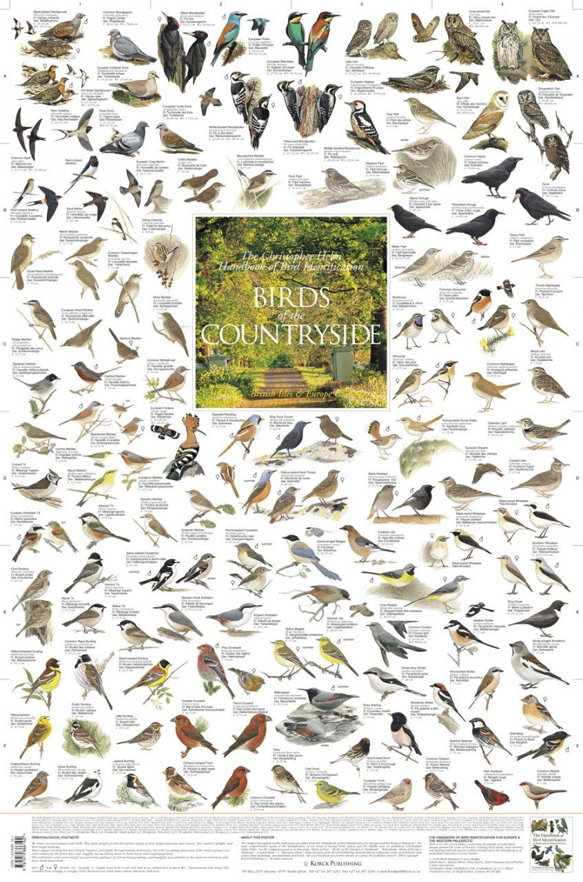 Birds of the Countryside: British Isles and Europe - Poster