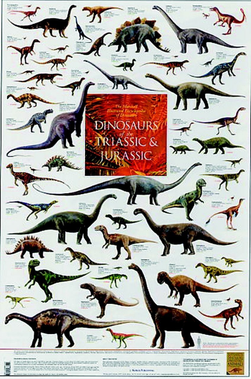 Dinosaurs of the Triassic and Jurassic - Poster