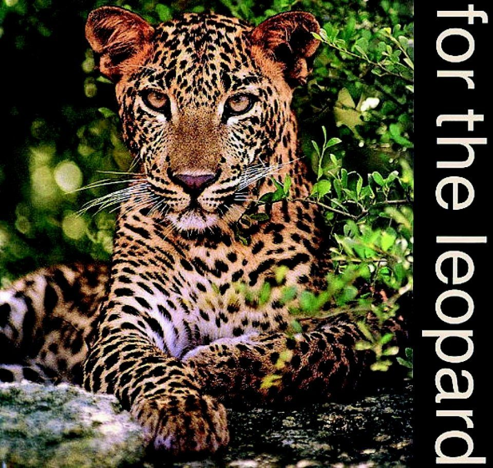 For the Leopard