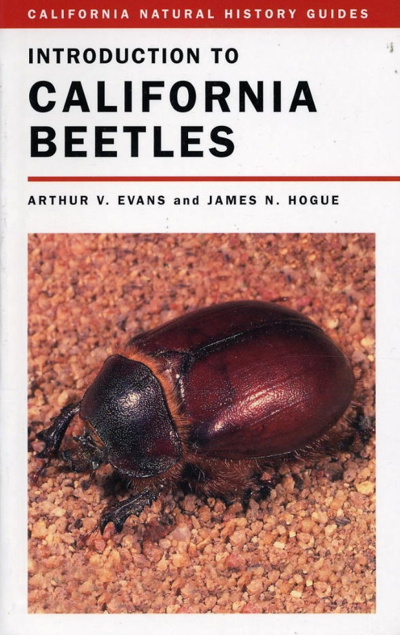 Introduction to California Beetles