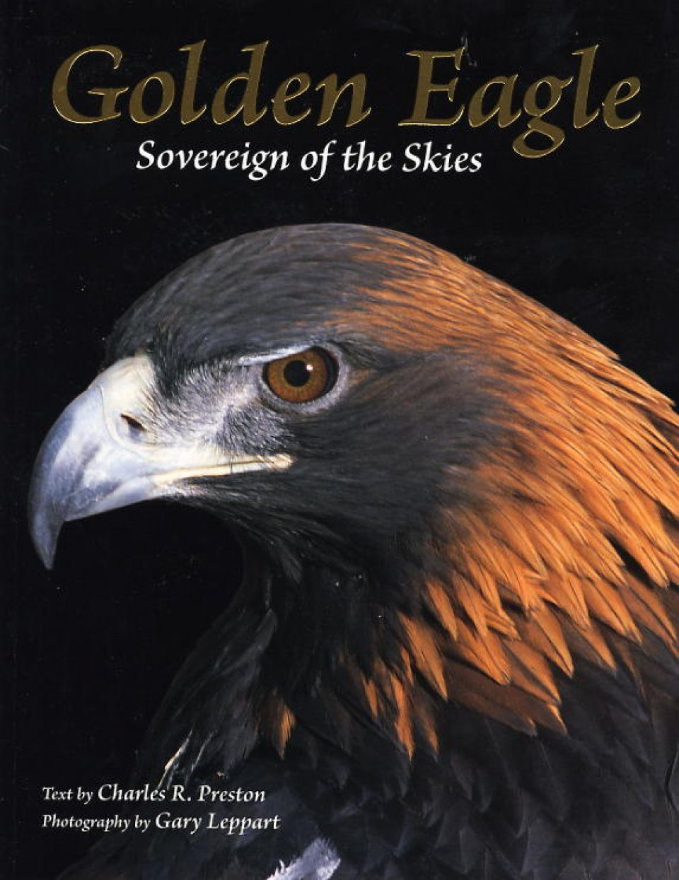 Golden Eagle: Sovereign of the Skies