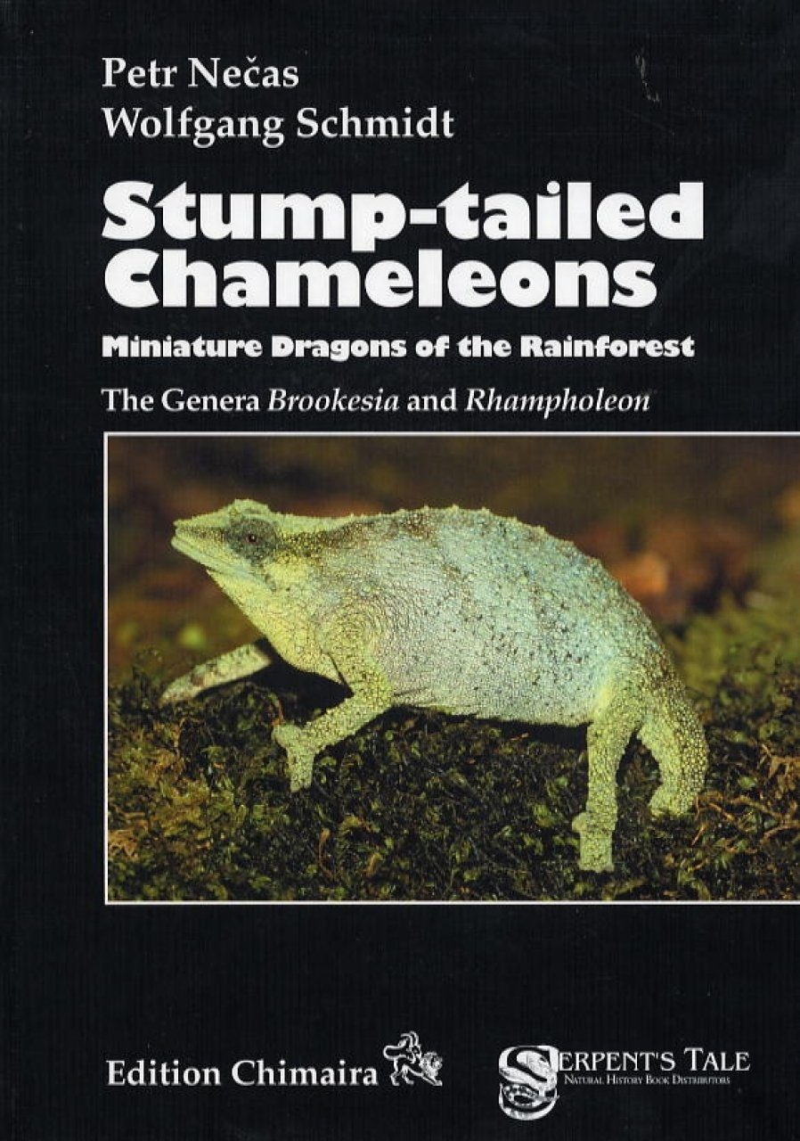 Stump-tailed Chameleons: Miniature Dragons of the Rainforest