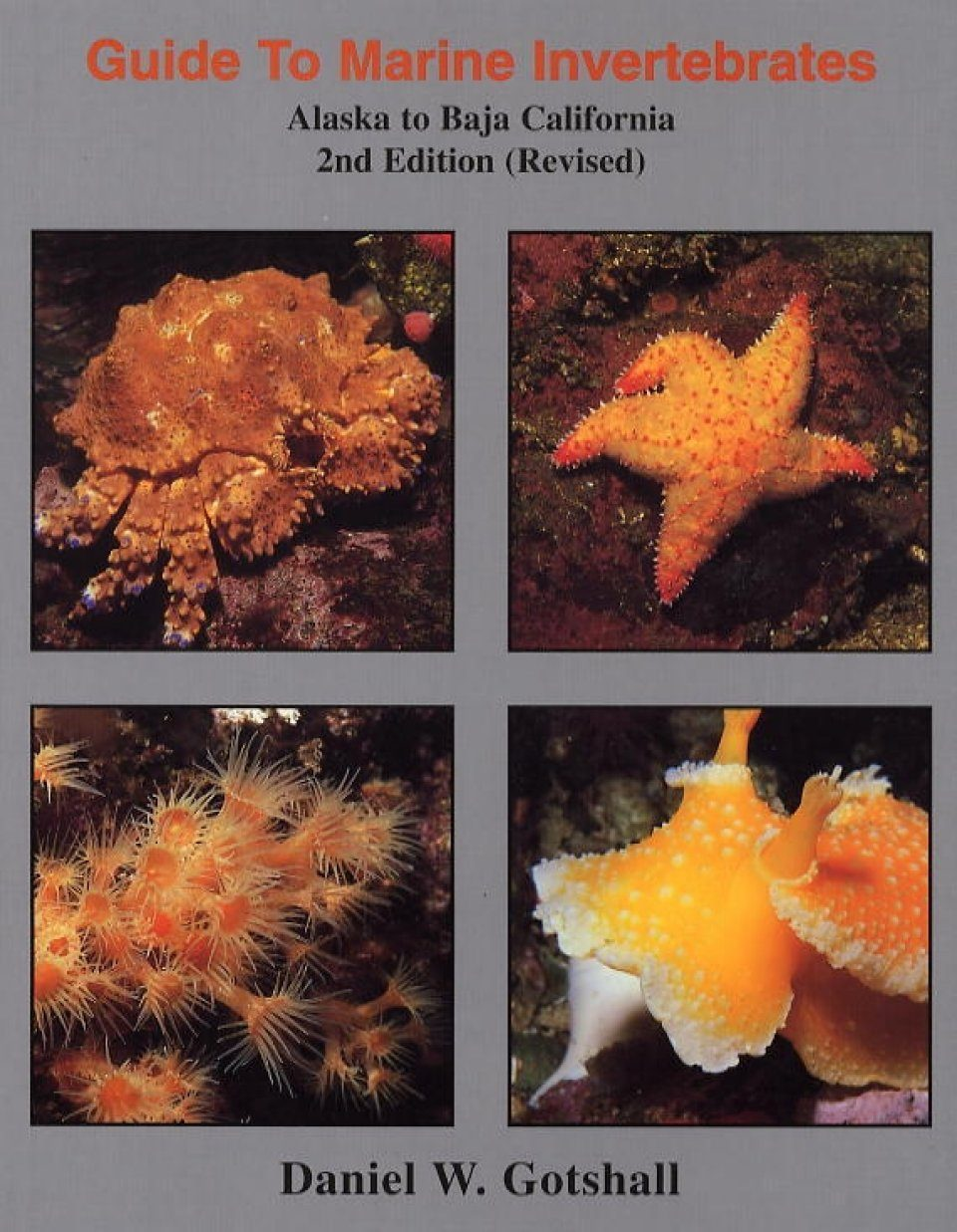 Guide to Marine Invertebrates