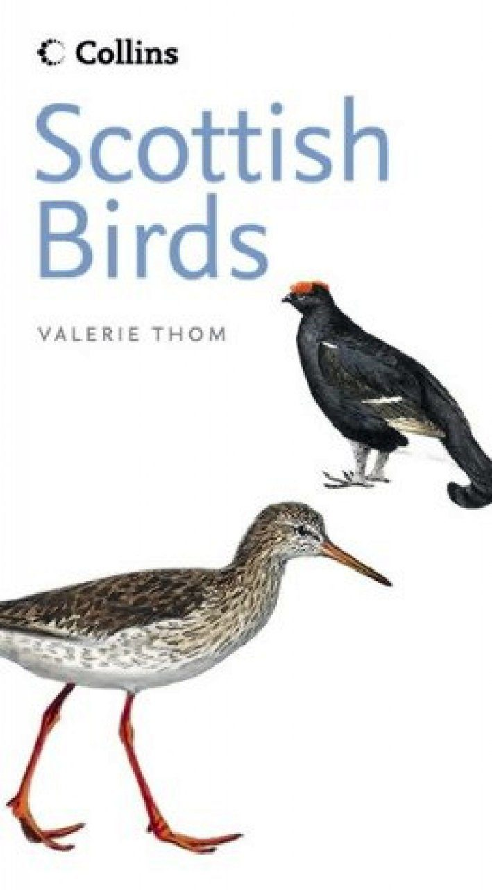 Collins Guide to Scottish Birds