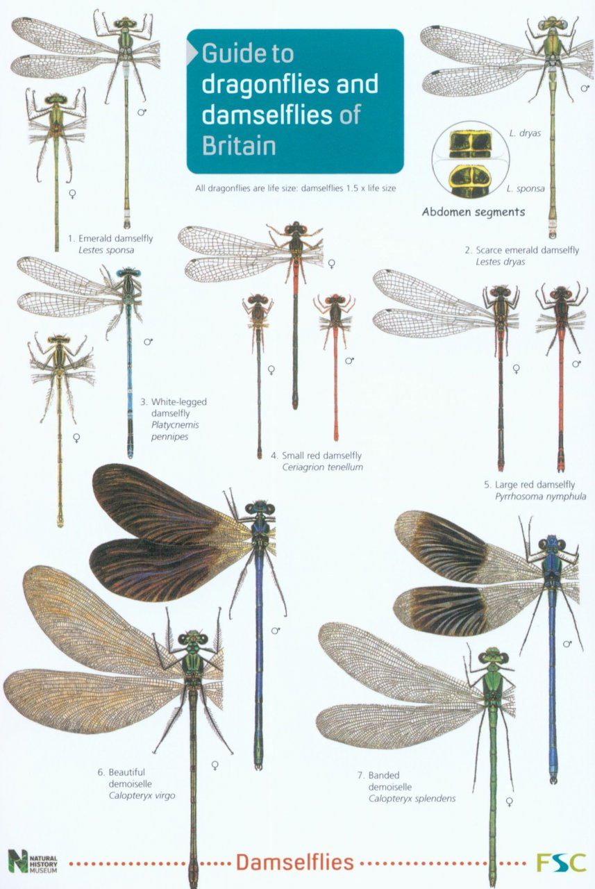 Guide to the Dragonflies and Damselflies of Britain